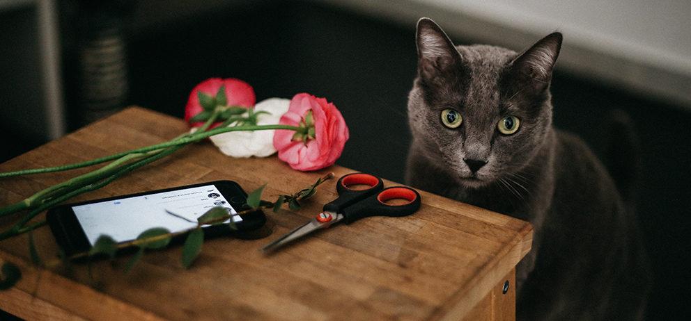 laboratori-creativi-assistente corso fiori