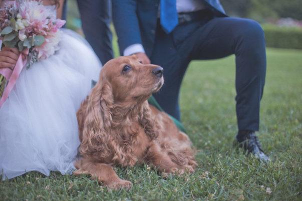 matrimonio romantico in umbria cane sposi