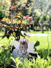 peter-rabbit-cartonato-illustrazioni-animali-2