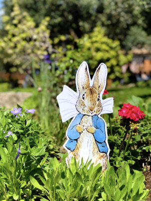 peter-rabbit-cartonato-illustrazioni-animali-4